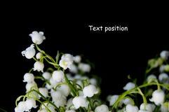 Ландыш Стоковая Фотография RF