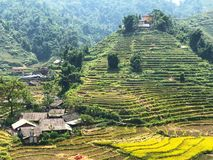 Лаосец Chai стоковая фотография rf