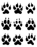 Лапка волка Стоковые Фотографии RF