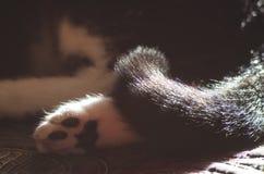 Лапка и кабель ` s кота Стоковые Фото