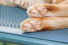 Лапка кота на предпосылке стула стоковая фотография