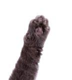 Лапка кота поднятая рукой стоковое фото rf
