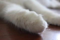 Лапка кота стоковое фото rf