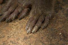 Лапка обезьяны Стоковое Фото