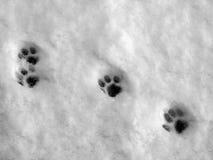 лапка печатает снежок Стоковая Фотография