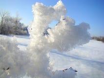 Лапка снега дерева которое сделало заморозок Стоковое Изображение RF