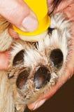 лапка собаки стоковое фото rf