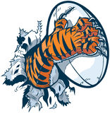 Лапка тигра сжимая шарик рэгби рвя из предпосылки Стоковая Фотография RF
