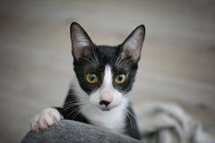 ЛАПКА ЧЕРНОГО CAT С КОГТЯМИ Стоковое фото RF