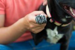 Лапка Dog�s Стоковое фото RF