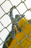 Лапка ` s попугая в клетке Стоковые Изображения RF