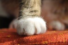 Лапки кота Стоковое Изображение