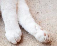 Лапки кота Closup Стоковая Фотография