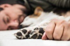 Лапки от собаки щенка и руки maleво фронте, человеке и whelp ослабляя стоковое изображение rf