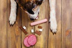 Лапки собак и клюв и куча запрещенной еды собак на деревянной предпосылке стоковое фото rf