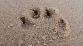 Лапки Sandy Стоковое фото RF