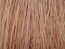 Лапша риса Брайна высушенная стоковые фото