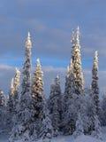 Лапландия Стоковая Фотография
