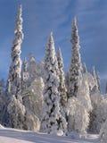 Лапландия Стоковое Фото