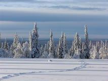 Лапландия Стоковое фото RF