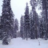 Лапландия - luosto Стоковые Фото