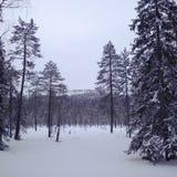 Лапландия - luosto Стоковое Изображение RF