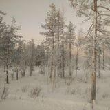 Лапландия - luosto Стоковая Фотография RF