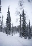 Лапландия - luosto Стоковые Фотографии RF