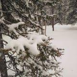 Лапландия - luosto Стоковое Фото