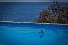 Ласточка бассейном, выпивая от бассейна стоковая фотография rf