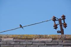 Ласточка на крыше Стоковые Фото