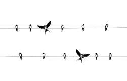 ласточка силуэта Стоковая Фотография