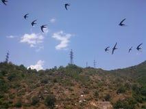 Ласточки летают на небо Стоковые Изображения