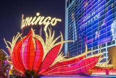Лас-Вегас, фламинго Стоковые Изображения