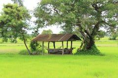 Лачуга в ферме Стоковое Фото