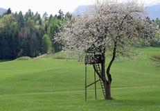 Лачуга звероловства в горах построенных над деревом стоковые фото