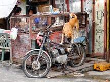 Лачуга на районе Baclaran в Маниле, Филиппинах стоковая фотография