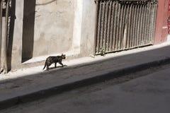 Ла Гавана Стоковые Изображения RF