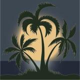 Ладони в лунном свете на пляже - векторе Стоковая Фотография