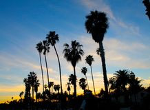 Ладони захода солнца над пляжем в Санта-Барбара Стоковые Изображения RF