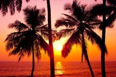 Ладони и солнце стоковая фотография rf