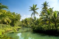 Ладони кокоса Индонезии Стоковые Фотографии RF