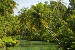 Ладони кокоса Индонезии Стоковое Фото
