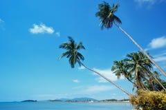 Ладони кокоса на береговой линии Bo Phut, Koh Samui, Suratthani, Таиланде Стоковые Фотографии RF