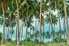 Ладони кокоса на тропическом пляже в Koh Samui, Таиланде Стоковое Изображение RF