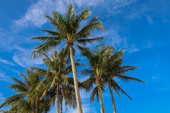 Ладони кокоса, остров Boracay, Филиппины Стоковая Фотография