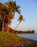 Ладони на заходе солнца Стоковые Изображения RF