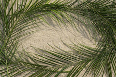 Ладони на песке Стоковые Фото