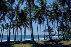 Ладони на пляже в Бали Стоковая Фотография RF