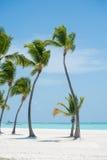 Ладони на пляже Стоковая Фотография